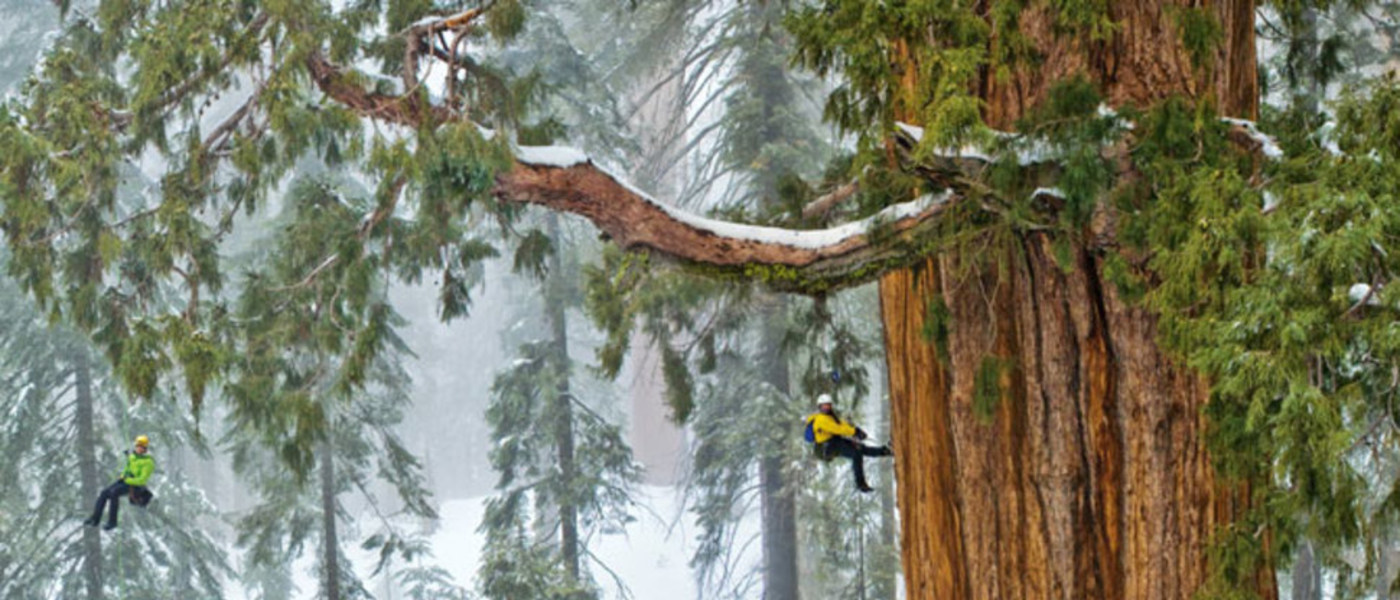 a team from National Geographic works to photograph the tree