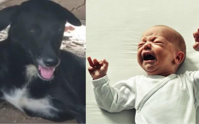 dog rescue baby